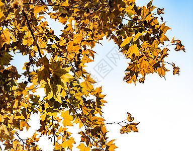秋天里的植物图片