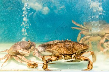超市商场里的大闸蟹图片