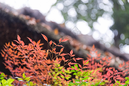 中国风园林小景拍摄图片