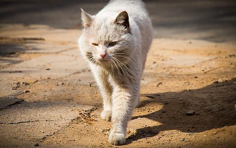 纯白流浪猫图片