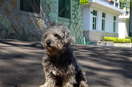 鼓浪屿之犬图片