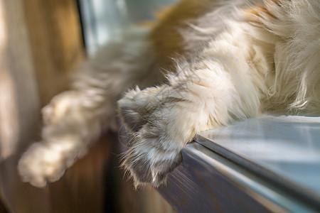 猫咪的爪子图片