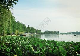 东湖荷花池图片