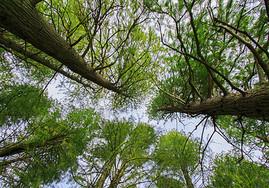 东湖鸟语林图片
