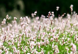 微距花朵图片
