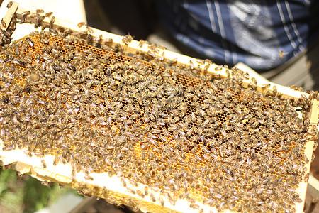 木质蜂箱图片