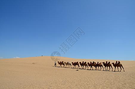 沙湖之沙漠之舟图片