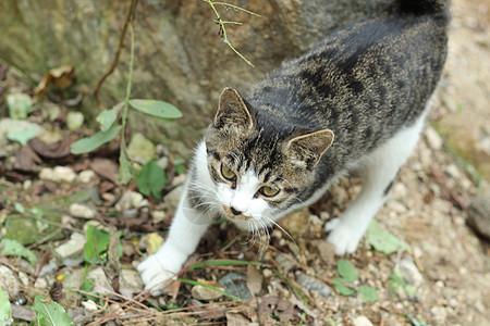 下山的小猫图片