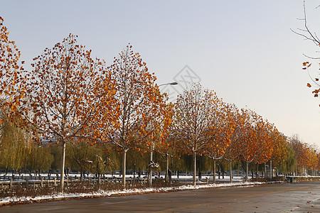 雪后校园图片