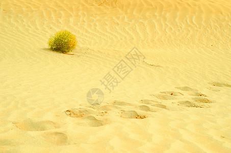 塔克拉马干沙漠的一株草图片