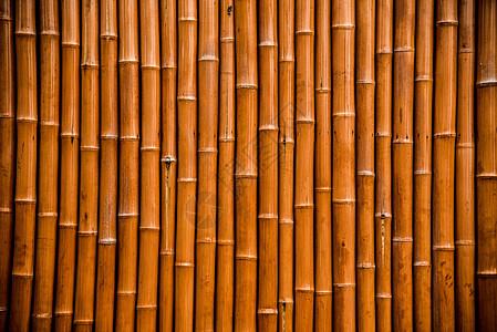 美丽的都江堰风景之竹墙图片