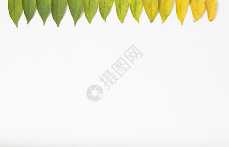 四季变换的树叶图片