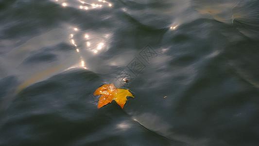 飘零的落叶图片