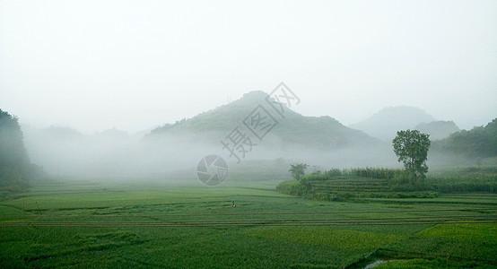 早晨的田野图片