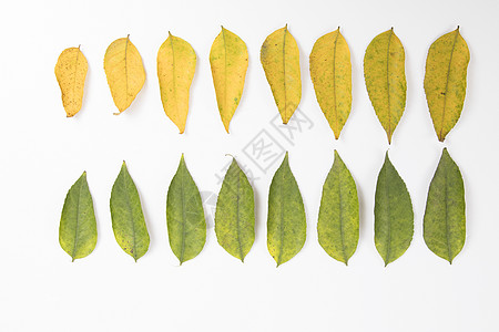 叶子的变化图片