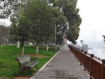 绿色大树 公园长椅 街边景色 绿化街道图片