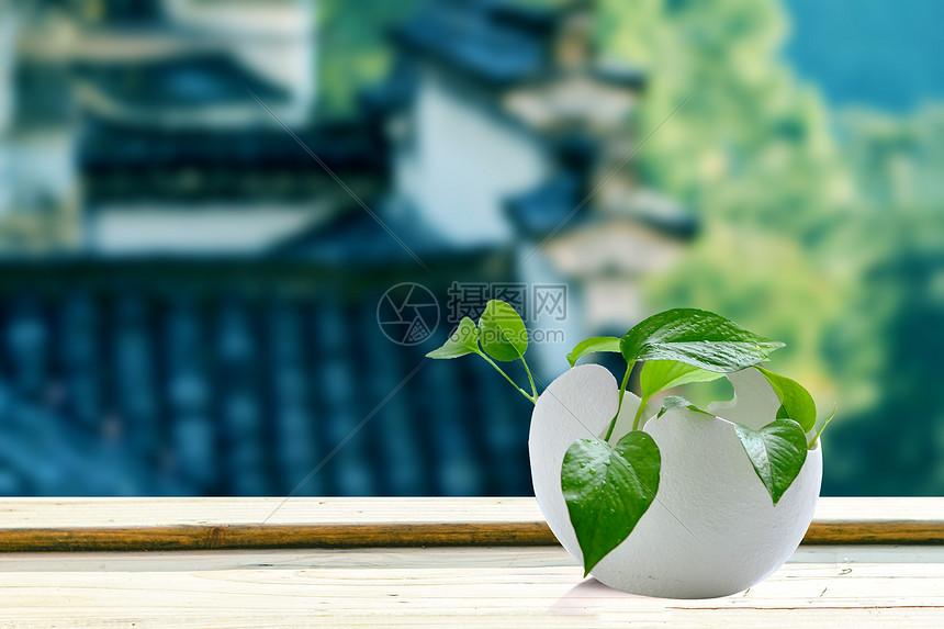 小盆栽图片