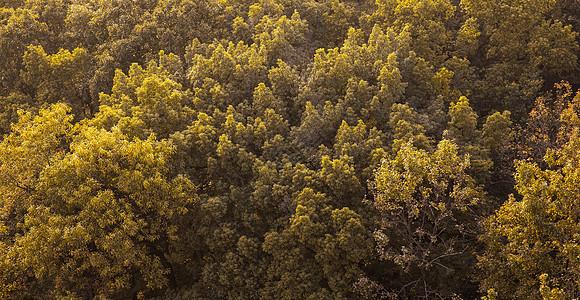 枝繁叶茂黄昏树木丛背景图片