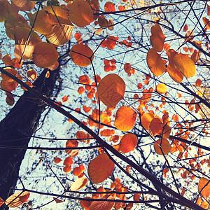 一叶知秋图片