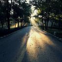 清晨的阳光图片