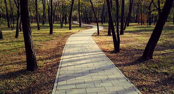 秋日树林图片
