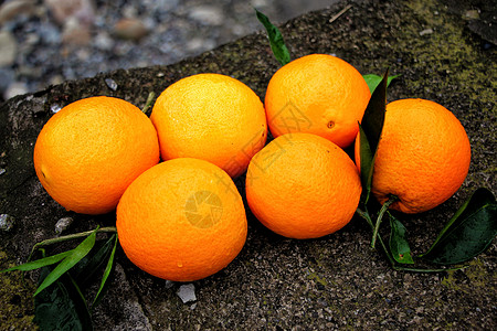 奉节脐橙高清图片