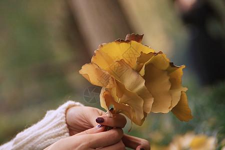 手中的银杏树叶图片