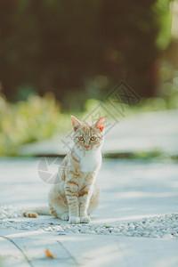清新坐姿小猫图片