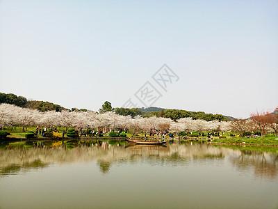 烟花三月赏樱花图片
