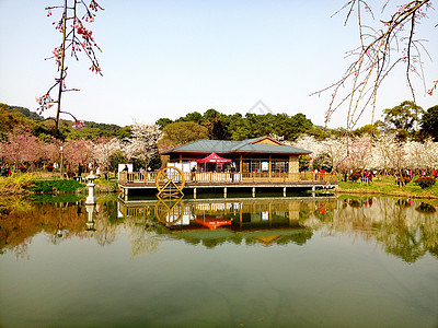 烟花三月下江城图片