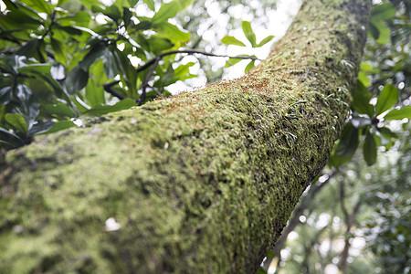 森林深处的植物图片