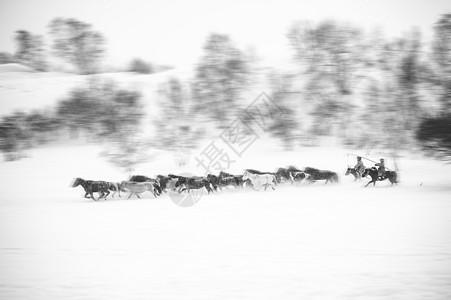 雪中赶马图片