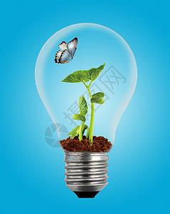 灯泡里的自然植物图片