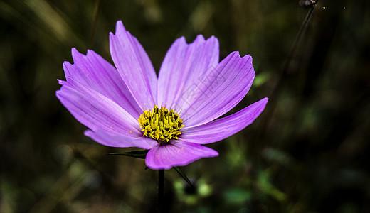 热爱自然图片