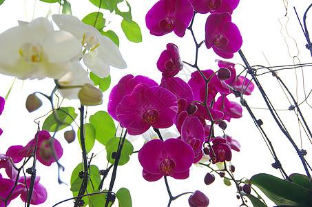 仰拍绚烂的多彩的兰花图片