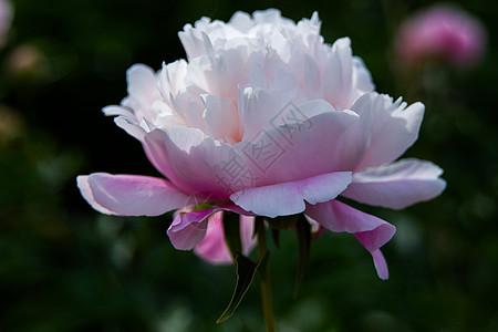 沧州公园花卉图片