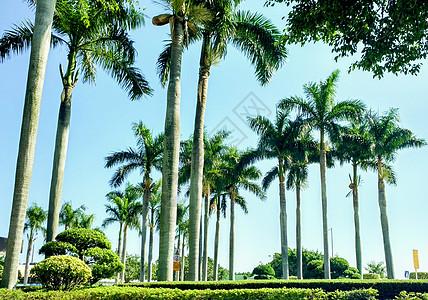 海边棕榈树图片