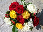 鲜艳的玫瑰图片
