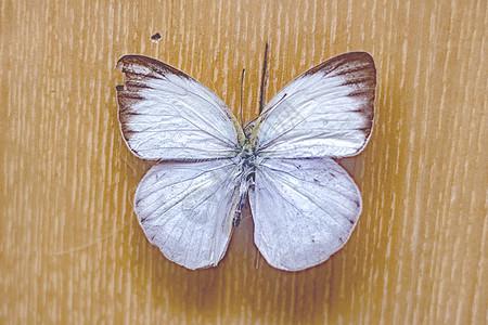 蝴蝶装饰图片