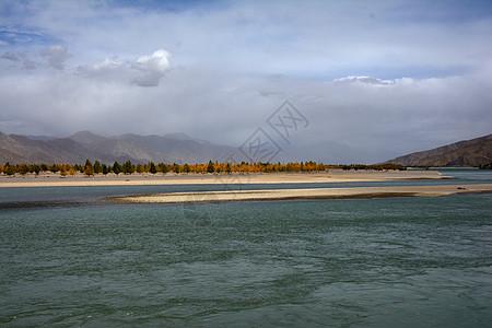拉萨河畔的金色的秋景图片