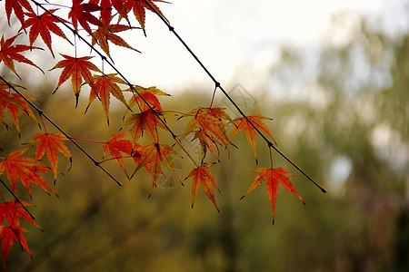 秋日枫叶、小孩、猫图片