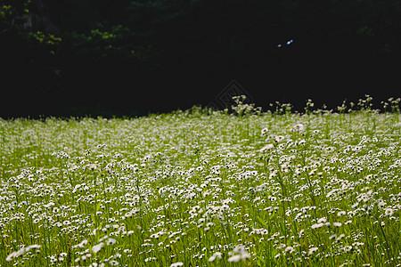 宿舍后大片的花丛图片