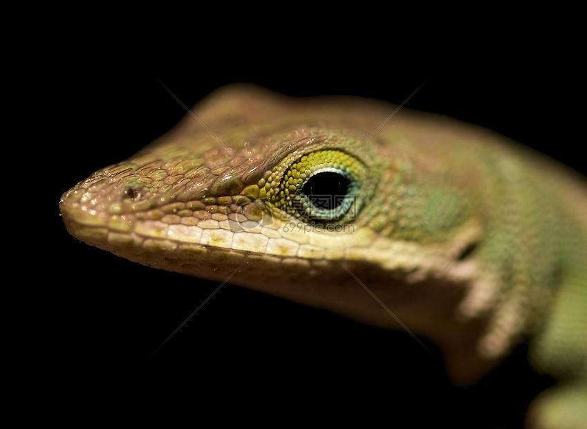 蛇头摄影图片素材免费下载_动物图库壁纸大全_编号-摄