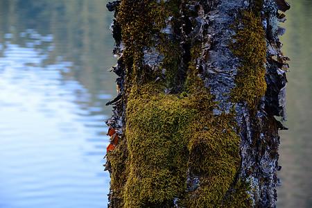 树干の微世界图片