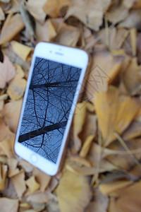 落叶上的风景图片