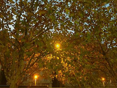 树叶里的路灯图片
