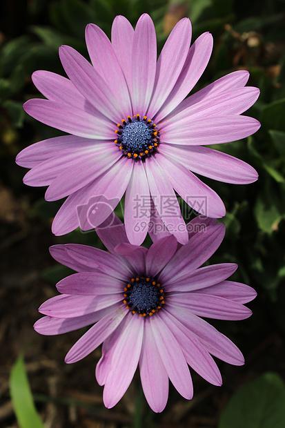 春日鲜花盛开图片