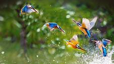 蜂鸟群图片