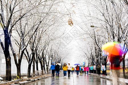 缤纷的白雪世界图片