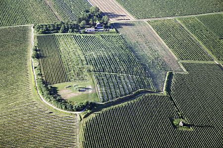 盆地葡萄庄园景观图片